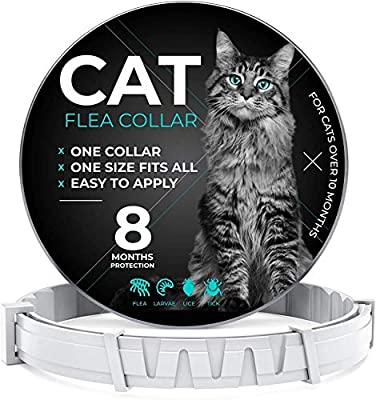 Cat Collar 8 Months Fit All Cats