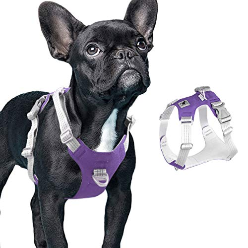 What Is a Easy Walk Harness