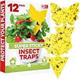 Best Fly Papers - Yellow Sticky Traps(12 Count), Fruit Fly Trap Review