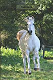 Horse notebook: This notebook has 100 lined pages, with a beautiful horse on the cover. 6 x 9 in