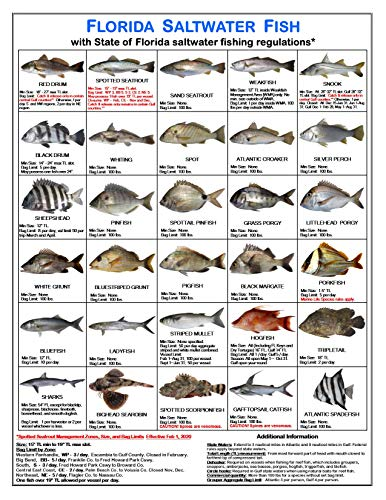 Tackle Box I.D. Florida Saltwater Fish Identification Card Set - Three Cards, 60 Common Fish - 17 Common Sharks - New Feb 1, 2020 Spotted Seatrout Rules and Zones