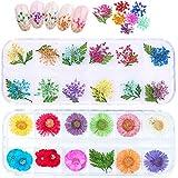 Flores Secas Para Uñas Cajas