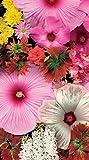 Springbok 91–170182,5cm Blossom Bouquet Pont Score Pad