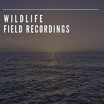 Soft Garden Wildlife Field Recordings