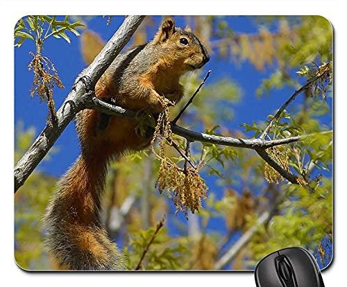 Mauspad Eichhörnchen Chipmunk Ast Baum Klettern Nager Schwanz Office Mauspad Langlebig Gaming Mauspad Mit Motiv Office Mat Für Büro Voyager Zuhause 25X30Cm