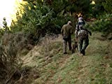 Bush Pig: New Zealand Wild Boar