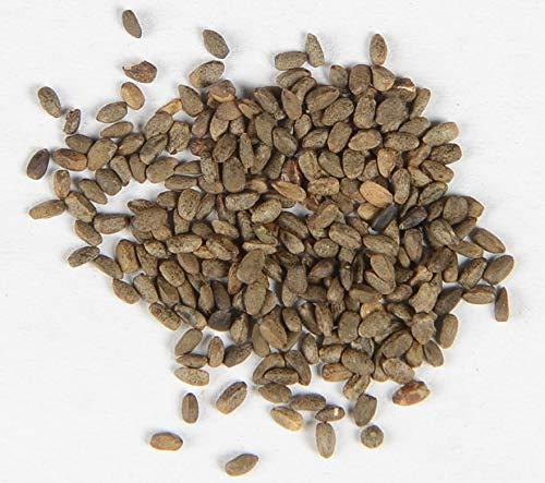 Andorn Marrubium vulgare 500 Samen