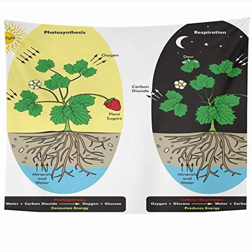 Wandbehänge Wandteppiche Photosynthese Dioxid Tau Baum Kohlenstoff Zellatmung Prozess Pflanze während der naturwissenschaftlichen Ausbildung Wandteppich Wanddecke Wohnkultur Wohnzimmer Schlafzimmer Wo