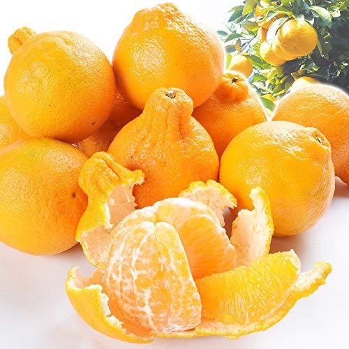 国華園 食品 みかん 熊本産 ご家庭用 不知火オレンジ 5kg