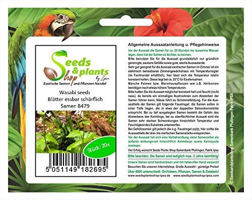 Stk - 20x Wasabi seeds Blätter essbar schärflich Garten Pflanzen - Saat B479 - Seeds Plants Shop Samenbank Pfullingen Patrik Ipsa
