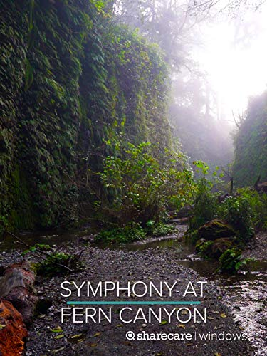 Symphony at Fern Canyon
