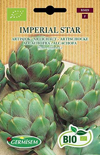 Germisem Artischocke IMPERIAL STAR