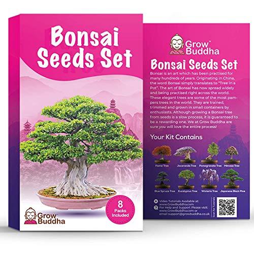 Bonsai Samen von Grow Buddha - Geschenkset - Züchten Sie Ihren eigenen Bonsai-Baum ganz einfach mit unserem 8 Bonsai Baumsamen Set. Anfänger freundlich - Einzigartiges Saatgut-Set Geschenkidee