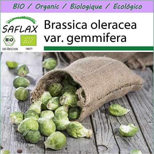 SAFLAX - BIO - Rosenkohl - Groninger - 30 Samen - Brassica oleracea