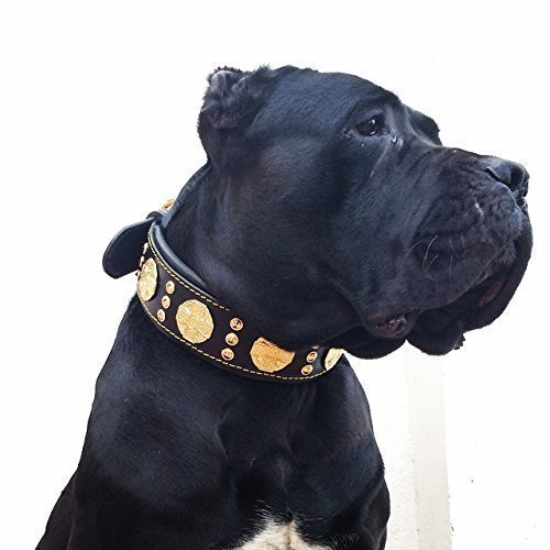 Bestia Maximus Genuine Leather Dog Collar, Large Breeds, Cane Corso, Rottweiler, Bullmastiff, Dogo, Quality Dog Collar, 100% Leather, Studded, L- XXL Size, 2.5 inch Wide. Padded. Made in Europe!