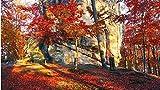 Pintura por números pintura al óleo de bricolaje kit de pintura de decoración del hogar para principiantes lienzo de lino preimpreso (sin marco) -Red Leaf Forest