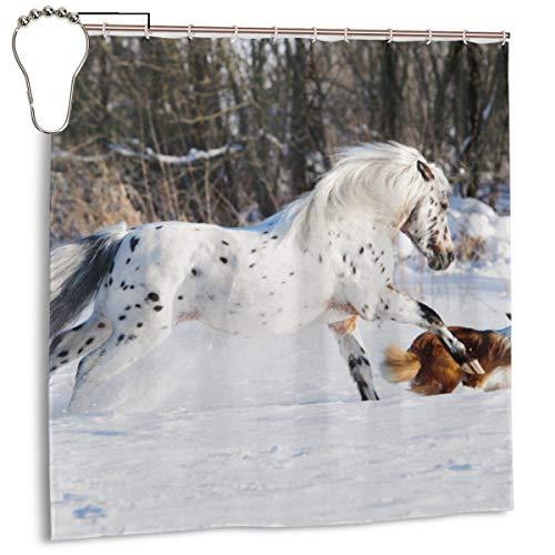 Lichenran El Legendario Appaloosa Pony y Sable Border Collie Corre al Galope en la Foto de Invierno, la decoración del hogar Cortina de Ducha 72inX72in