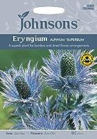 JOFL 英国ジョンソンシード Eryngium alpinum superbum エリンジューム・アルピナム・スペルバム