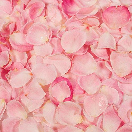 PME Cake Decorating Sugarcraft 100% Natural Flavour Flavouring Liquid Rose 25g