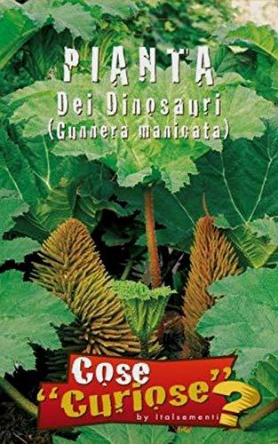 ScoutSeed GUNNERA MANICATA Pflanze der Dinosaurier Riesen-Rhabarber Packung/Packung 10-15 Samen Samen
