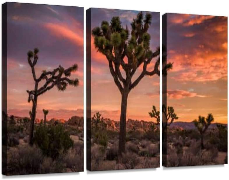 YKing1 Joshua Tree Desert Popularity Landscape at a Sunset Discount mail order Sunsets Romantic