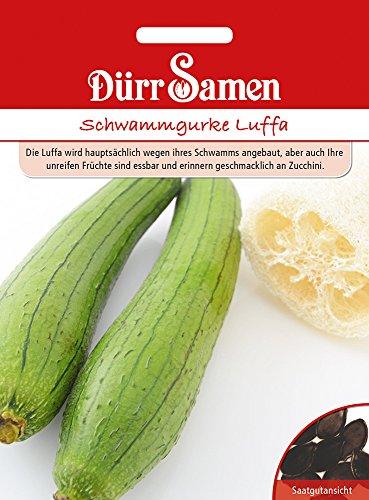 Schwammgurke Luffa | Schwammgurkensamen von Dürr-Samen