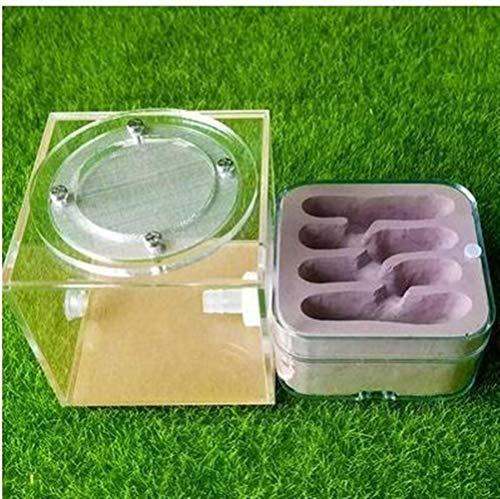 WWL Cajas de Insectos Yeso Hormiga Nido acrílico Ant Farm Las Hormigas Reina Casa Jaula de Insectos Hormigueros Mascotas casa de la Hormiga Granja De Hormigas Hormiguero (Color : H)