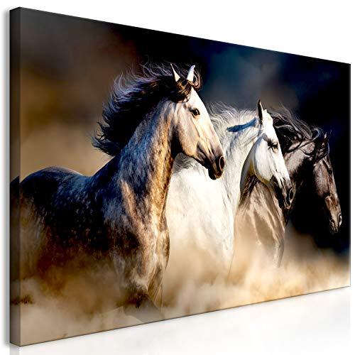 murando Cuadro en Lienzo Caballo 120x60 cm impresión en Material Tejido no Tejido impresión artística fotografía Imagen gráfica decoración de Pared – Animal g-B-0132-b-a