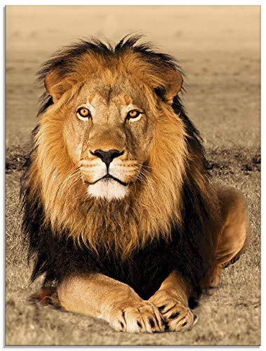 Artland Glasbilder Wandbild Glas Bild einteilig 60x80 cm Hochformat Afrika Safari Tiere Löwe Savanne Natur Porträt T5RJ