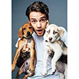 JQQBL Plakate Liam Payne Porträtgemälde Plakat hübscher