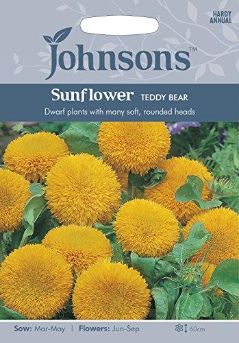 Johnsons 14281 Flower Seeds, Sunflower Teddy Bear, Yellow