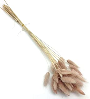 Country-living Natural Pastoral Style Natural Material Shooting Props Dried Flowers Bouquets Bunny Tails Rabbit Tail Grass 60pcs Length 45cm (Foxtail)