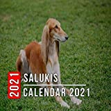 Salukis Calendar 2021: 12-month mini Calendar from Jan 2021 to Dec 2021, Cute Gift Idea For Salukis Lovers Or Owners Men And Women | Pictures in Every Month