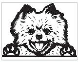 Biomar Labs® 1 x Pegatina Vinilo Autoadhesivo Calcomanias de la Ventana para Coche Car Moto Puerta Casco Scooter Bici Motocicleta Tuning Dog Perro Pomerania B 98