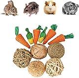 Jouets de cochon d'Inde, jouets de carotte à mâcher pour...