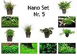 Tropica Nano Set mit 6 Einfachen Kleinen Topf Pflanzen Aquariumpflanzenset