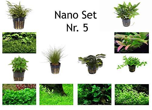 Tropica Nano Set mit 6 einfachen kleinen Topf Pflanzen Aquariumpflanzenset Nr.5 Wasserpflanzen Aquarium Aquariumpflanzen
