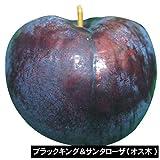 国華園 果樹苗 スモモ ブラックキング&サンタローザ 2種2株