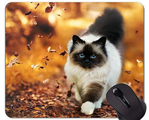 Mausunterlage mit genähtem Rand, blaue Augen-Himalajakatze-Tiererdennatur-Katze rutschfeste Gummibasis Mousepad