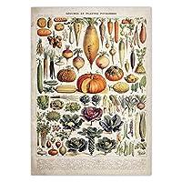 野菜識別ポスターヴィンテージ野菜植物壁アートパネル科学教育キャンバス絵画インテリア植物写真チャート版画寝室家装飾画