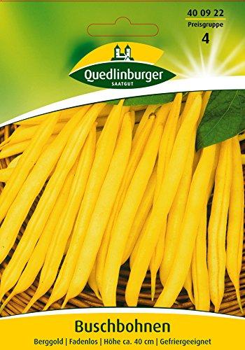 Buschbohnen Berggold | Fadenlos | Höhe ca. 40 cm | Gefriergeeignet (Phaseolus vulgaris) Standardsaatgut EG-Norm