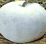 Big Pack - (100) Winter Melon Round, Wax Gourd Seeds - Tong Qwa - Used in Asian Soup Dishes - Non-GMO Seeds by MySeeds.Co (Big Pack - Wax Gourd)