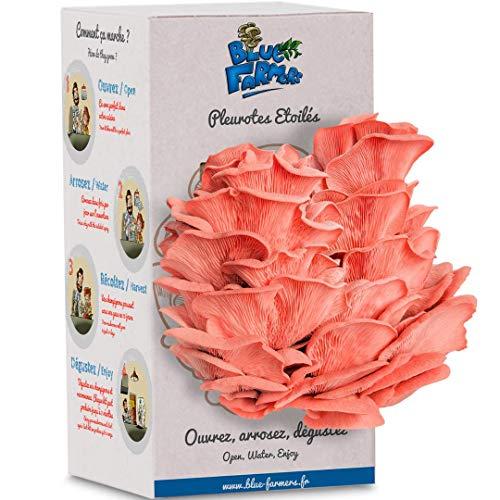 Cultivo de hongos | Kit sorpresa de ostras hambrientas | Kit de setas de ostras rosas, amarillas o grises | Crece en 10 días | Hecho en Francia | Blue Farmers | Regalo Original … (Rosas) (Rosas)