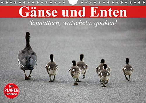 Gänse und Enten. Schnattern, watscheln, quaken! (Wandkalender 2021 DIN A4 quer)