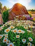 5D diamante bordado margarita cuadrado diamante pintura flor mosaico imagen de diamantes de imitación decoración del hogar pintura A6 60x80cm