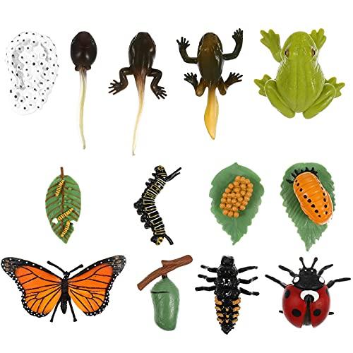 TOYMYTOY 2 Conjuntos de Figuras de Ciclo de Vida de Mariposas Mariquita Ranas Figuras de Insectos Etapas de Vida Juguetes Modelo para Proyecto Escolar Educativo