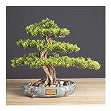 NYKK Bonsai Artificial Realista Faux Bonsai Tree, Plant, Pote Redondo de cerámica...