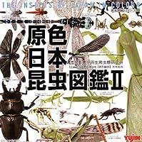 ガシャポン 原色日本昆虫図鑑 Ⅱ ハタケノウマオイ 単品