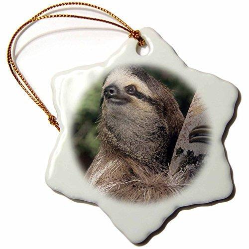 cwb2jcwb2jcwb2j 3-Inch Porcelain Snowflake Decorative Hanging Ornament, Three-Toed Sloth Wildlife, Costa Rica Sa Ksc Kevin Schafer