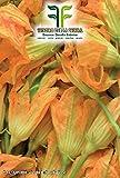 Semi Zucchino da Fiore,Mondonatura Srl